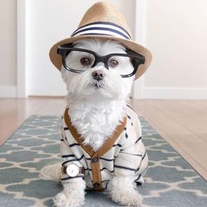 A dog in a cardigan